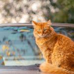 Pet Franchise vs Auto Detailing Franchise